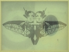 bobolfly-1-organza-stampata-e-foto-cm-47x62-copia