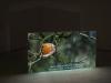 Ti avevo avvertito, 2014Video installazione, 10ýýý 57__Proiezione su muro, cm. 100x180x10