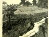 Morandi Giorgio- Paesaggio di Grizzana
